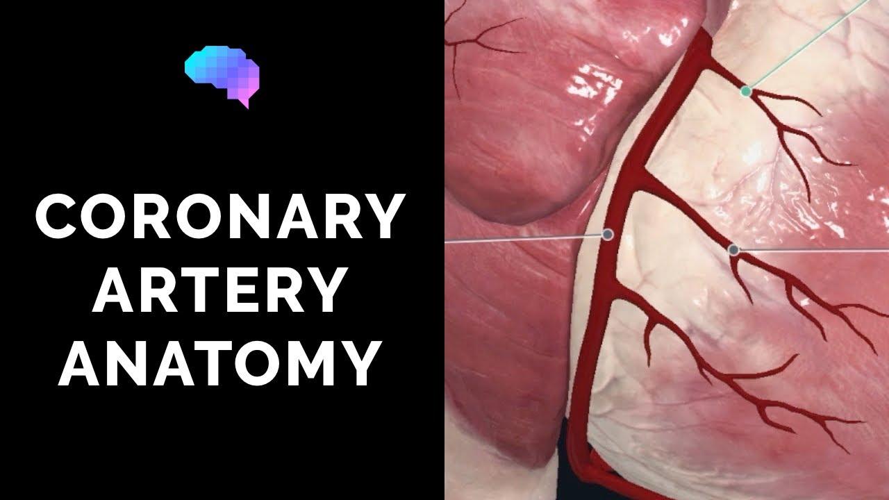 Coronary Artery Anatomy 3d Anatomy Tutorial