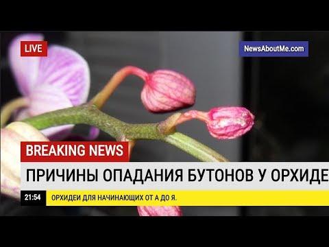 Почему опадают бутоны у цветущих орхидей?