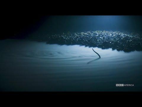 Planet Earth: Blue Planet II | Brine Pool | Coming to BBC America 2018