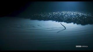 Planet Earth: Blue Planet II   Brine Pool   Coming to BBC America 2018