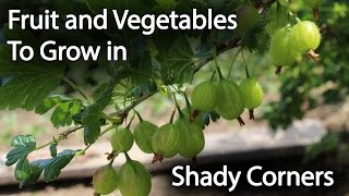 Baixar Fruit and Vegetables to Grow in Shade to Increase Productivity