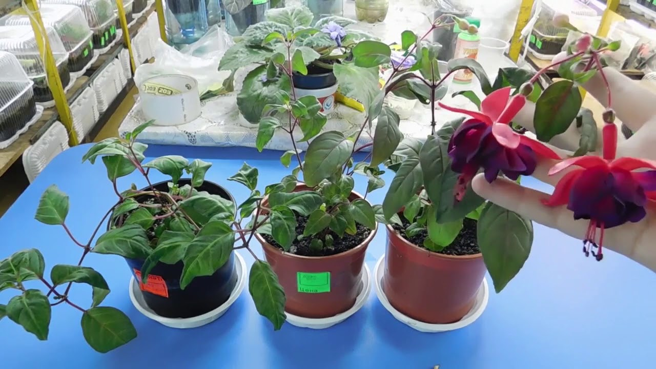 Миксбордеры с розами схемы