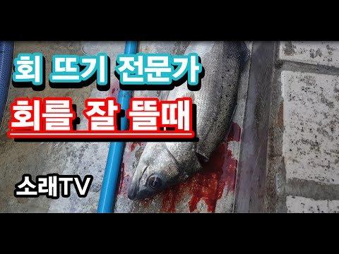 전문가 회뜨기의 달인-회를 잘 뜰때 part-2(makin