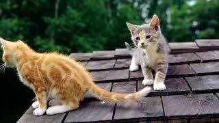 Кошки, котики, котята, cats, cat #1 (#кошки #котики #котята #cats #cat)