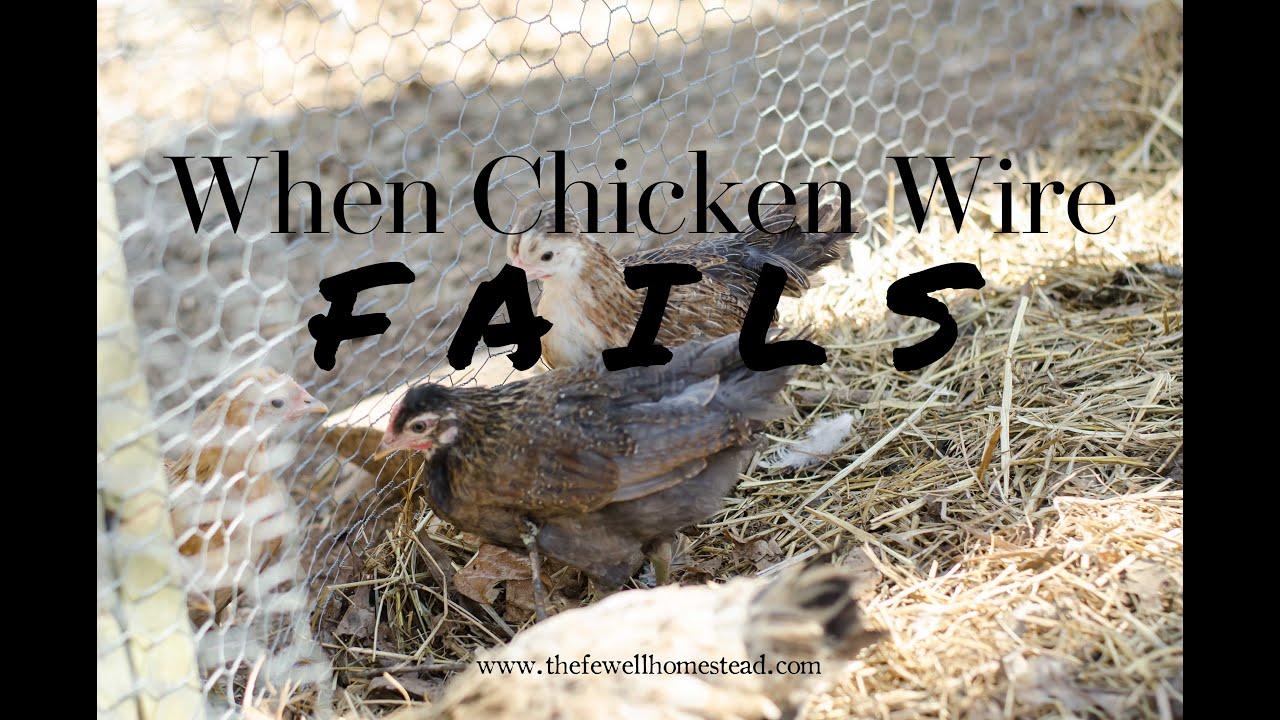 When Chicken Wire Fails - YouTube