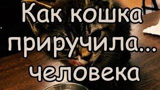 Когда Кошка и Человек Действительно Любят Друг Друга Как Кошка Приручила Человека
