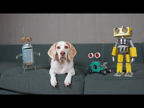 dogs-vs-steampunk-robot-war:-funny-dogs-maymo,-potpie,-&-penny