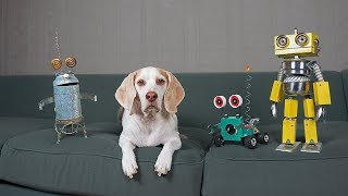 Dogs vs Steampunk Robot War: Funny Dogs Maymo, Potpie, & Penny