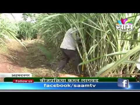 Ashok Girje sugarcane success story