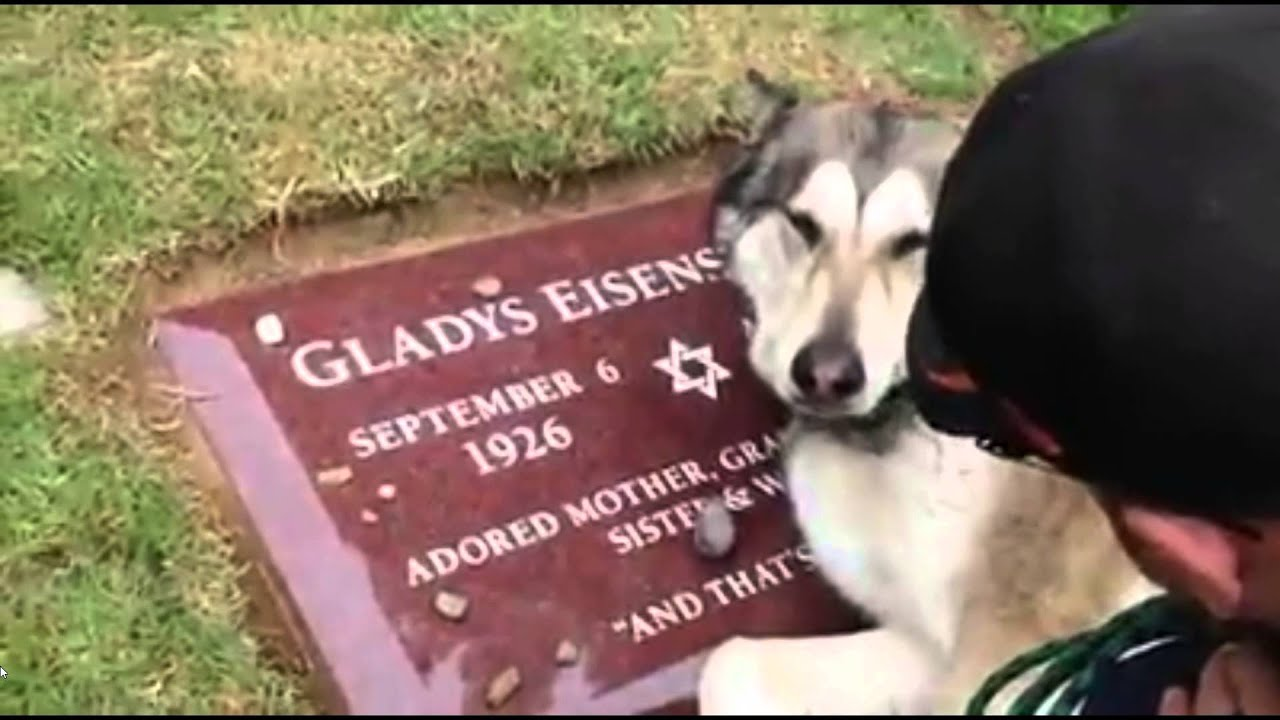 Dog cries on grave for its' owner - YouTube
