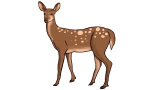 deer drawing easy clipart female draw step elk face dead clip clipartmag clker rating