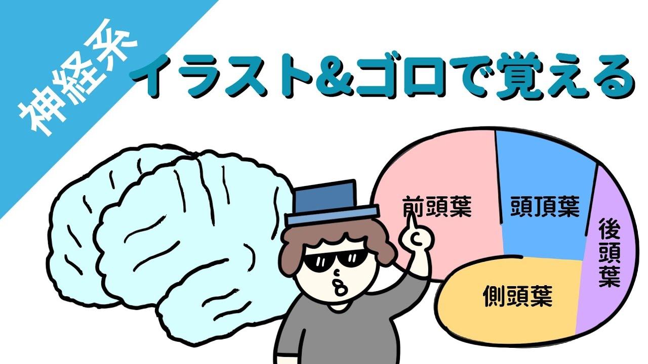 葉 機能 頭頂