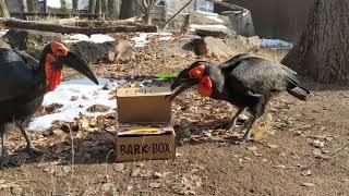 Barkbox December 2019