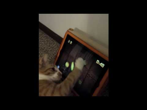 YoYo the kitten playing fruit ninja on the iPad