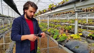 Toprasız Tarım Çilek Yetiştirme ve Bakım Kokopit (Cocopeat) 2 www.ozgenakin.com