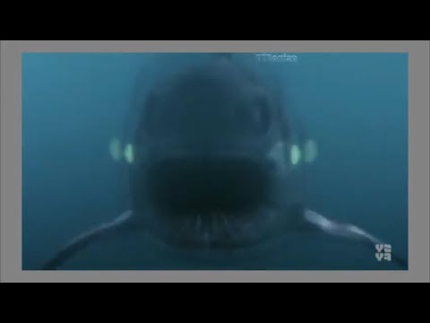 2017 Новинка (Мощный Фильм про Акул) Смотреть HD