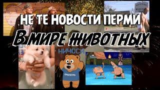 Не те новости Перми: В мире животных