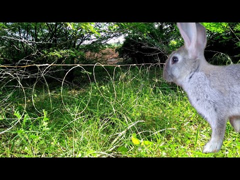 Primitive Technology: Rabbit Hunting Trap | Sneak peak