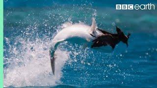Fish Vs Bird | Blue Planet II | BBC Earth