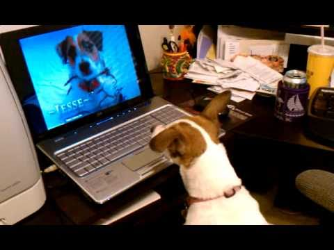 Jasmine watches Jesse in the Jack Russell Christmas Video