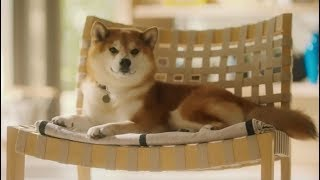 Funny Japanese Commercials Jan 2019 Ep09