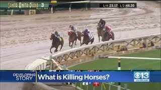 Racetrack Shut Down After Death Of 21 Horses