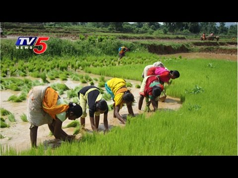 agriculture issues kerala