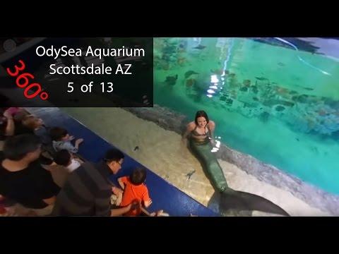 Aquarium In Scottsdale Az