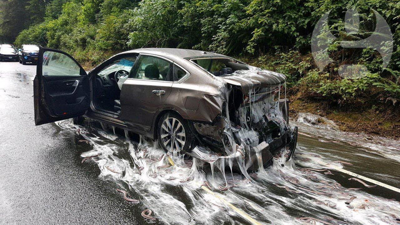 Slime eels' cover Oregon road after truck overturns - YouTube