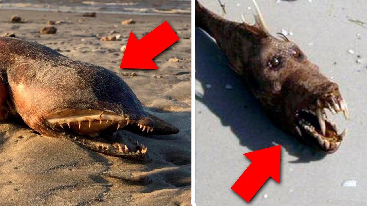 Resultado de imagem para 7 criaturas inacreditáveis descobertas após tsunamis