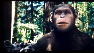 Rise of the planet of the apes Caesar is home