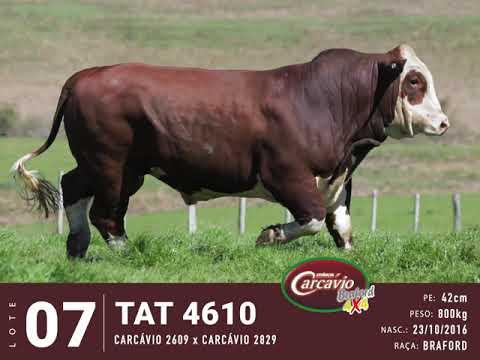 LOTE 07 - TAT 4768