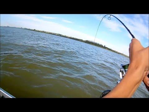 Como pescar corvina!