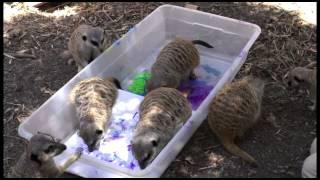 Oakland Zoo's 2015 Animal Art Show