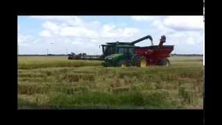 2014 Cutting Rice in south Louisiana