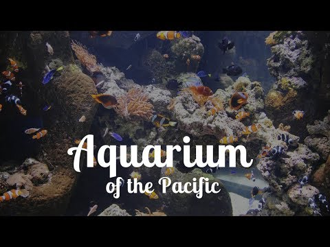 Aquarium of the Pacific - Long Beach, CA 2019 - Discovery Time