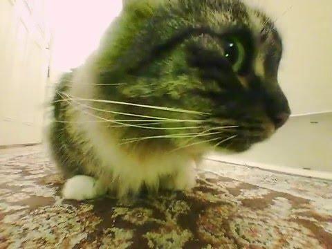Close Encounters - Cat Meets Drone