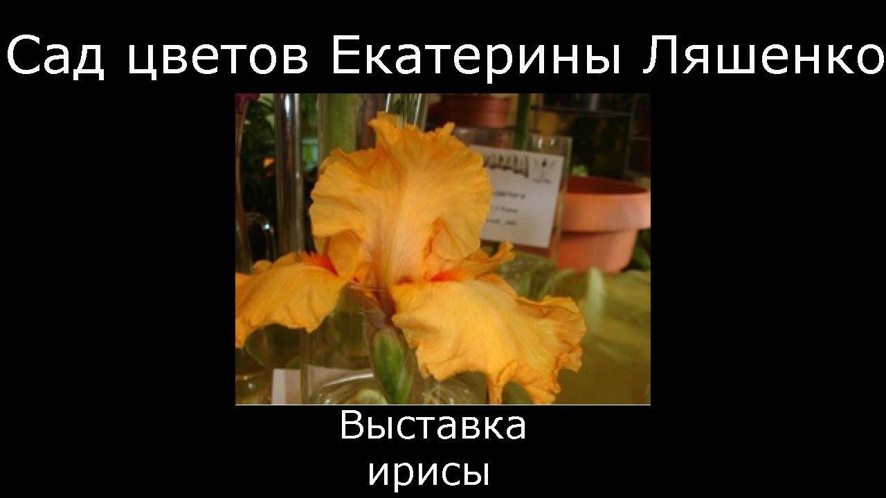 Луковичные с желтыми цветами