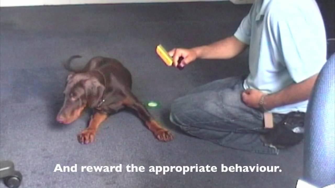 Dog Training Grooming Youtube