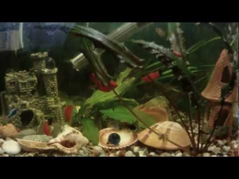 Моя аква 50 л. Рыбки + Креветки + Улитки + Растючка