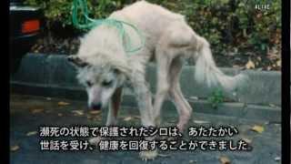 ハンカチぶんこ「実験犬シロのねがい」より―問われる動物実験