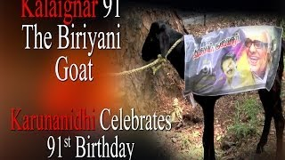 Kalingar 91 | The biriyani Goat @ Kanimozhi House | Karunanidhi Celebrates 91st birthday
