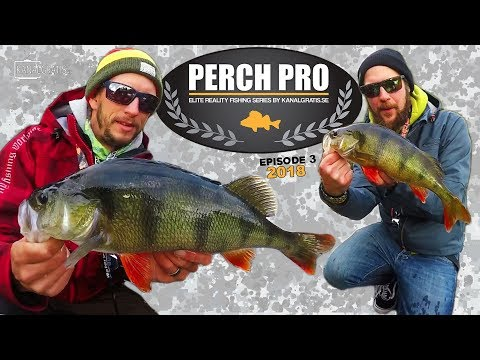 Perch Pro 2018 - EPISODE 3 - with French, German & Russian subtitles