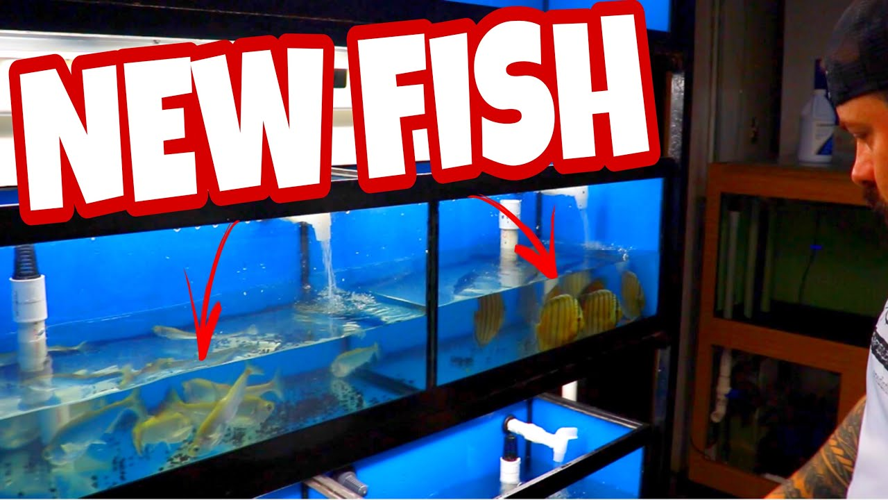 What's in the boxes? We received some awesome fish in this shipment *unboxing* part 1