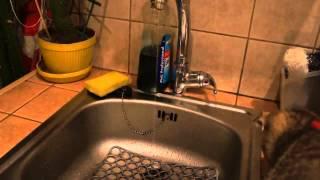 Котёнок первый раз пьет воду из под крана))) умиление))