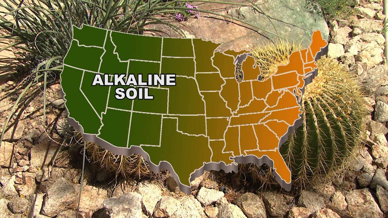 Star Nursery Dr Q Alkaline Soils You