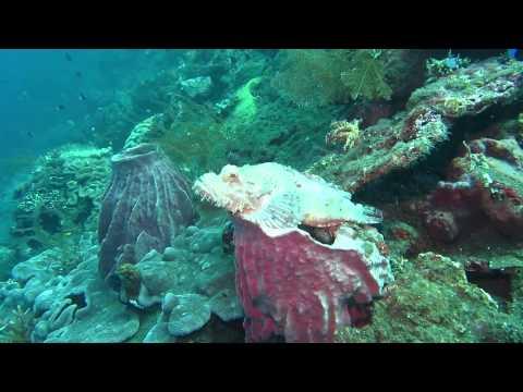 2013 Tulamben Bali Spot Diving