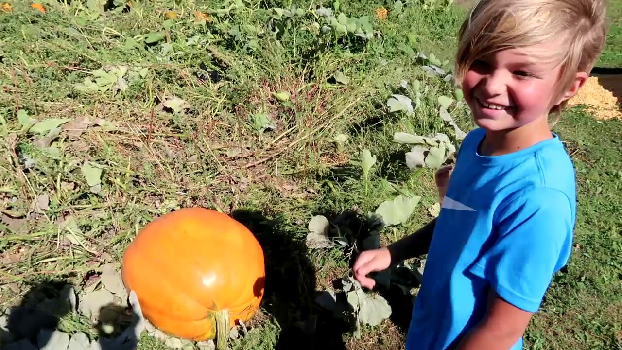 Taking the Family to the Big Stone Pumpkin Patch - YouTube