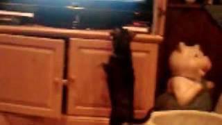Ruby watching tv