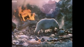 Living Next to a Killer | Wild: Polar Bear Diary | BBC